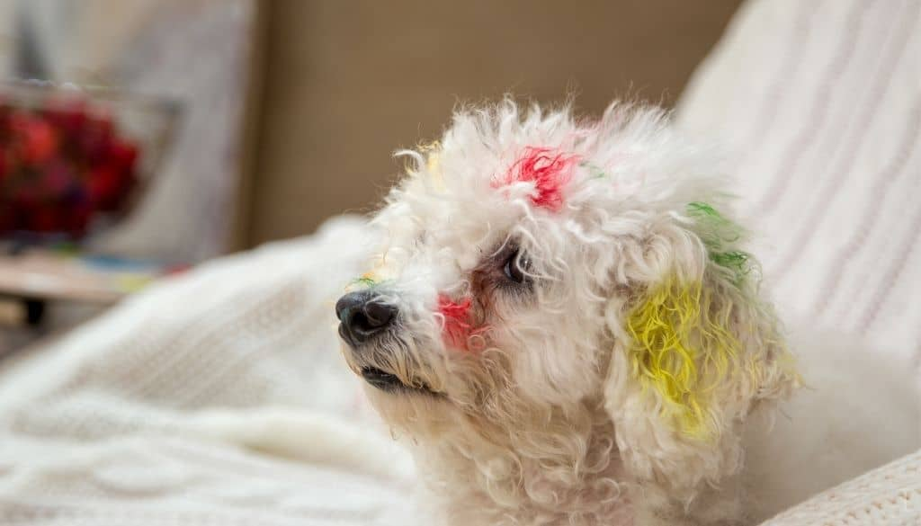 Are Acrylic Paints Toxic To Animals